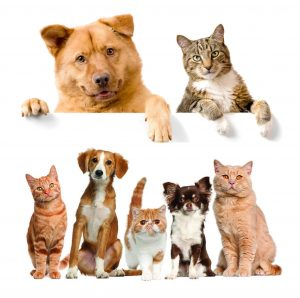 Thuốc Cho Chó Mèo