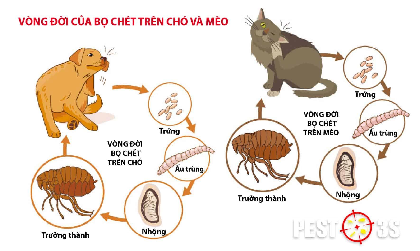 Vòng đời của bọ chét trên chó và mèo