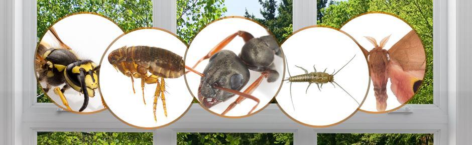 Hantox 200 - Diệt các loại côn trùng hiệu quả cao