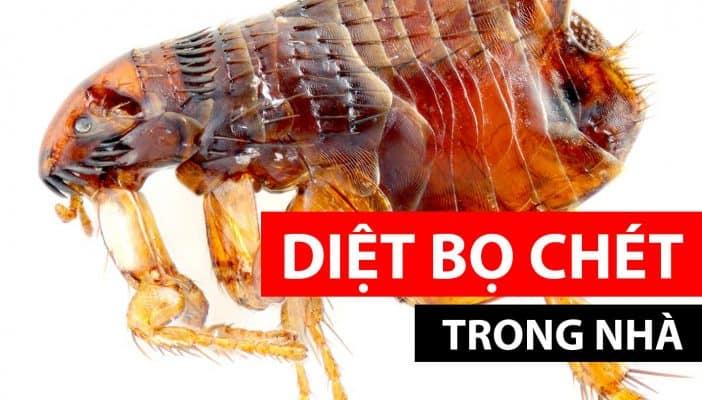 Cách diệt bọ chét trong nhà hiệu quả nhất