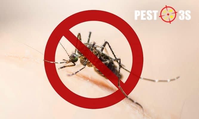 Cách diệt muỗi hiệu quả nhất