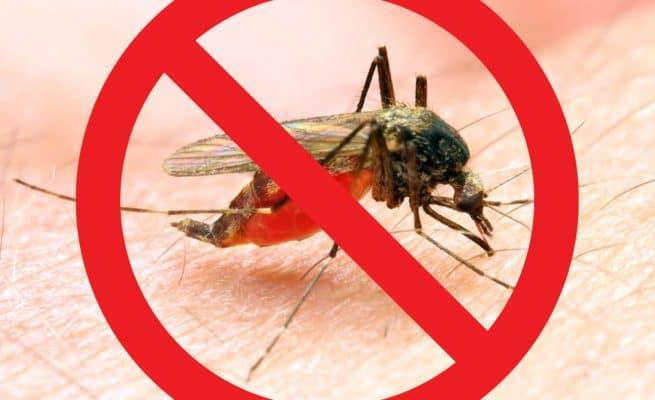 Cách diệt muỗi trong nhà và ngoài nhà hiệu quả