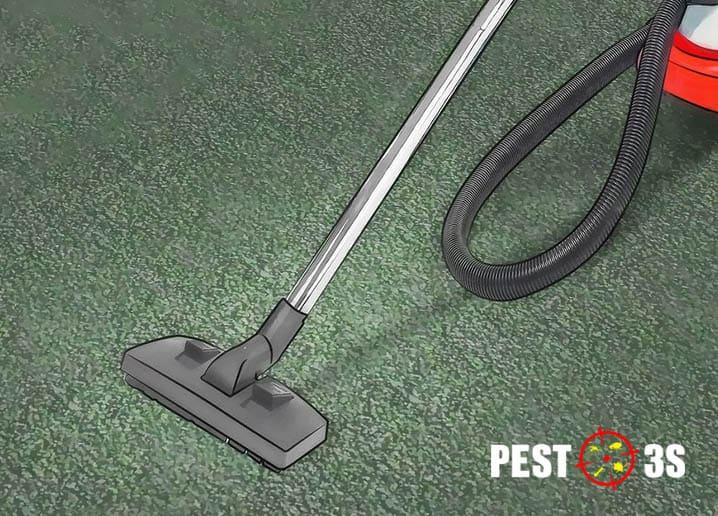 Hút bụi thường xuyên diệt bọ chét