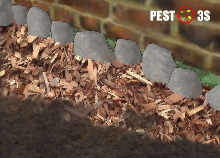 Tuyết trùng diệt bọ chét hiệu quả