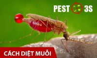 Cách kiểm soát và diệt muỗi tại nhà hiệu quả nhất