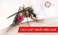 Loài muỗi và cách diệt muỗi hiệu quả