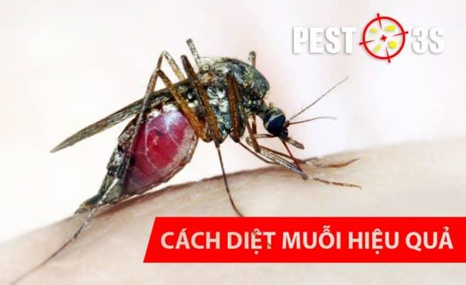 Cách diệt muỗi đơn giản